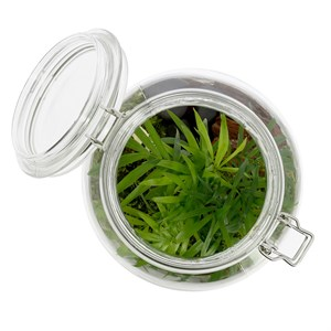 Terrarium Mini Monde Nature Decouvertes