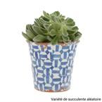 Succulente Lisboa grand pot