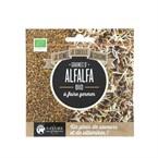 Graines d'alfalfa à faire germer