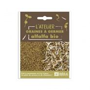 Graines à germer alfalfa bio 50 g diy