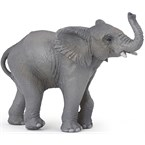 Jeune éléphant