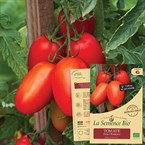 Tomate prince borghese bio