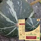 Potimarron green hokkaïdo bio