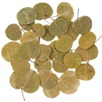 Feuilles de moneta - 50 grammes