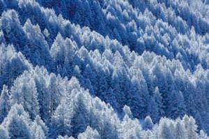 biodiversité des forêts