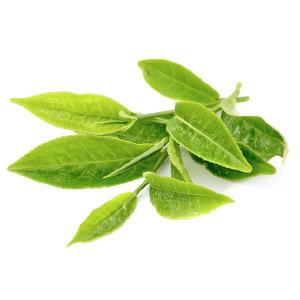 arbre à thé